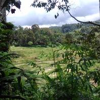 Piladang, Kec. Palembayan (24 November 2014)(2)