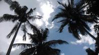 Ini nih...pohon kelapa yg saya gosipin itu tadi... Hahahaa