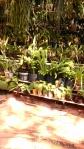 Tanaman khas Harau Resort