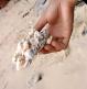 Salah satu karang