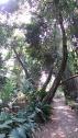 Pohon kayunya unik..
