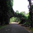 Kebun Raya Bogor With Meican & Weni (18 Juni 2015) (113)