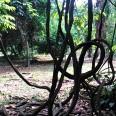 Kebun Raya Bogor With Meican & Weni (18 Juni 2015) (119)