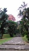 Kebun Raya Bogor With Meican & Weni (18 Juni 2015) (128)