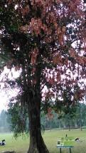 Kebun Raya Bogor With Meican & Weni (18 Juni 2015) (140)