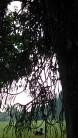 Kebun Raya Bogor With Meican & Weni (18 Juni 2015) (141)