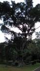 Kebun Raya Bogor With Meican & Weni (18 Juni 2015) (150)
