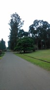 Kebun Raya Bogor With Meican & Weni (18 Juni 2015) (161)