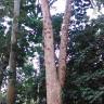 Kebun Raya Bogor With Meican & Weni (18 Juni 2015) (65)