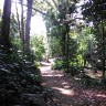 Kebun Raya Bogor With Meican & Weni (18 Juni 2015) (66)