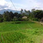 Piladang, Palembayan (18 Juli 2015)(3)