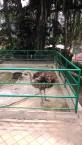 Kebun Binatang Kinantan Bukittinggi (13 September 2015) (10)