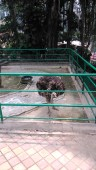 Kebun Binatang Kinantan Bukittinggi (13 September 2015) (9)
