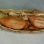 Kacang Goreng Lawang (11 September 2015)(4)