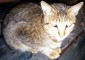 Kucing Enek (5 Oktober 2015) (2)a