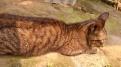 Kucing Enek (3 Oktober 2015) (3)w
