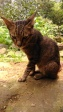 Kucing Enek (3 Oktober 2015) (23)w