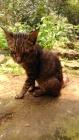 Kucing Enek (3 Oktober 2015) (24)w