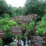 Pembibitan aneka tanaman bakau